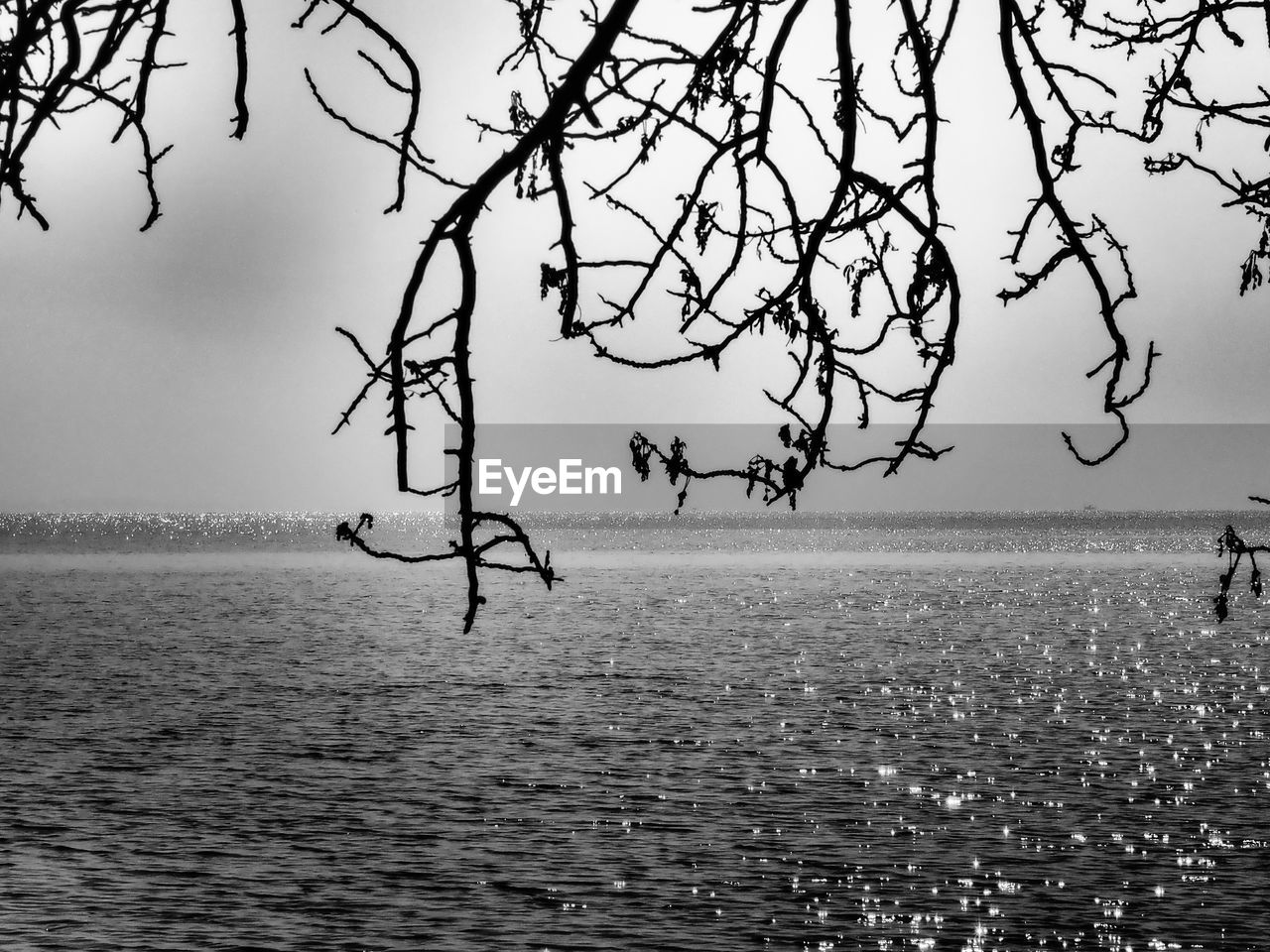 sea, water, nature, beauty in nature, tranquility, outdoors, tree, horizon over water, waterfront, scenics, day, no people, branch, sky
