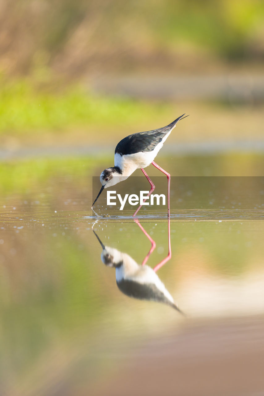 Close-Up Side View Of A Bird With Reflection