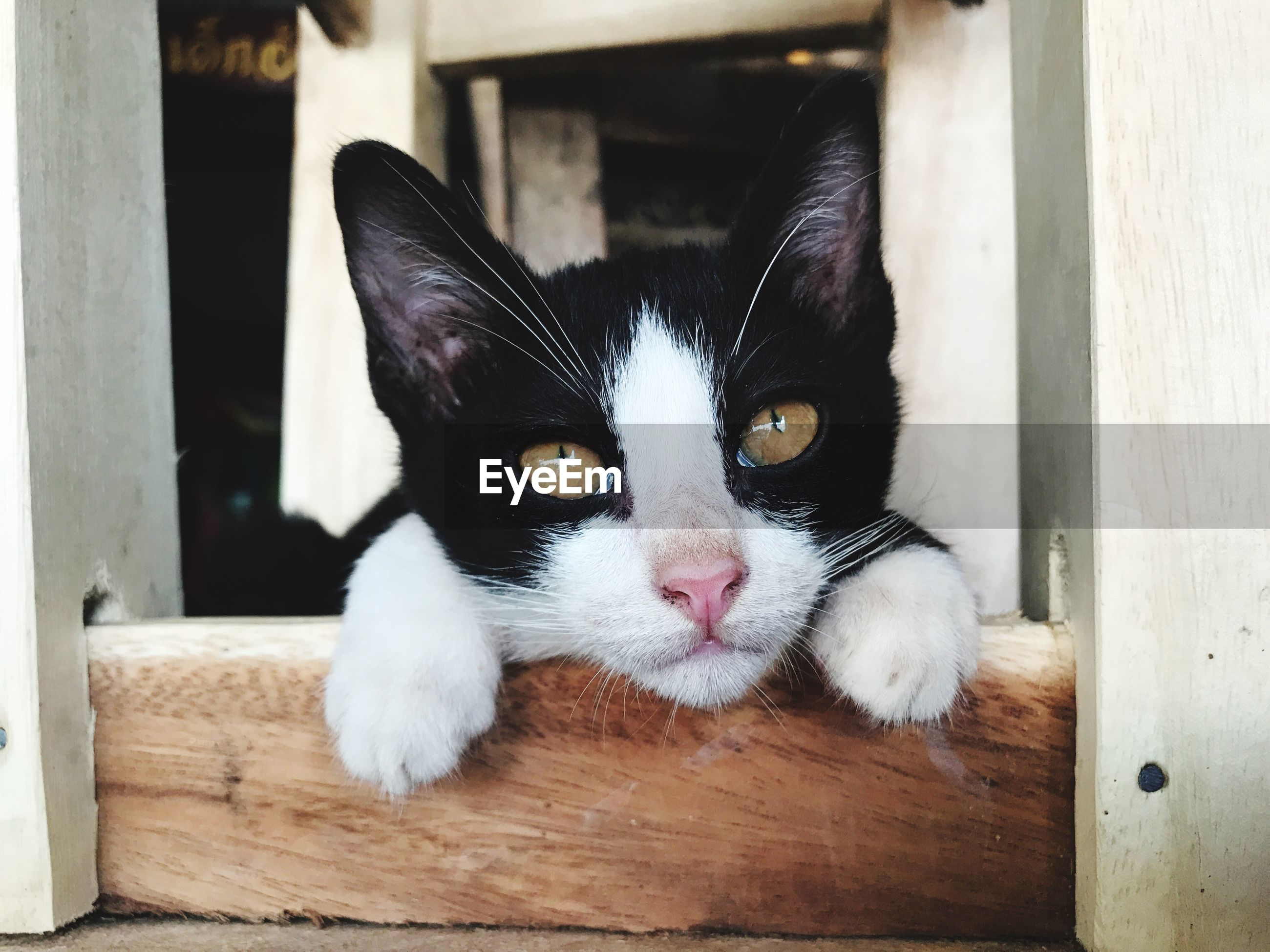CLOSE-UP PORTRAIT OF CAT WITH EYES CLOSED ON WOODEN FLOOR