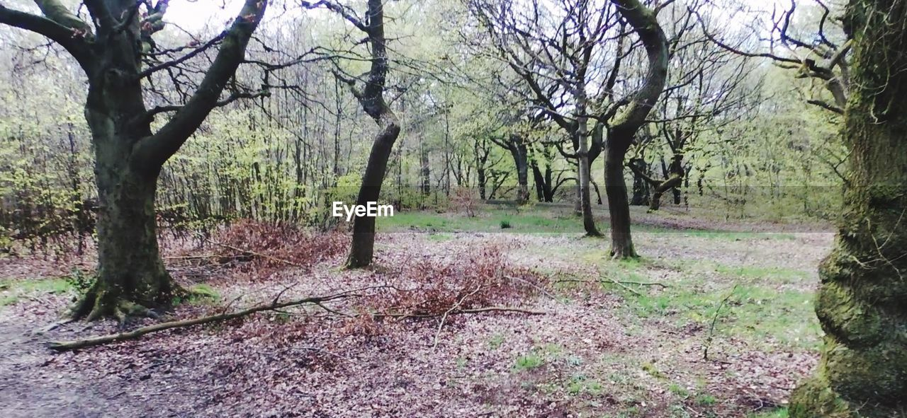 tree, plant, land, tranquility, forest, trunk, tree trunk, nature, landscape, environment, no people, tranquil scene, day, beauty in nature, growth, branch, scenics - nature, outdoors, woodland, remote, trail