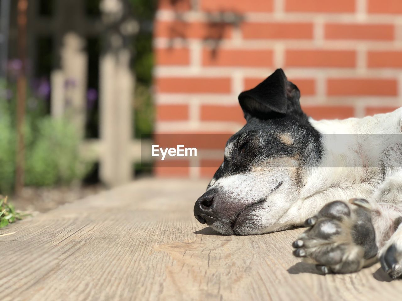 domestic, domestic animals, mammal, one animal, pets, animal themes, animal, dog, canine, vertebrate, relaxation, no people, focus on foreground, lying down, close-up, day, sleeping, resting, looking away, wood - material