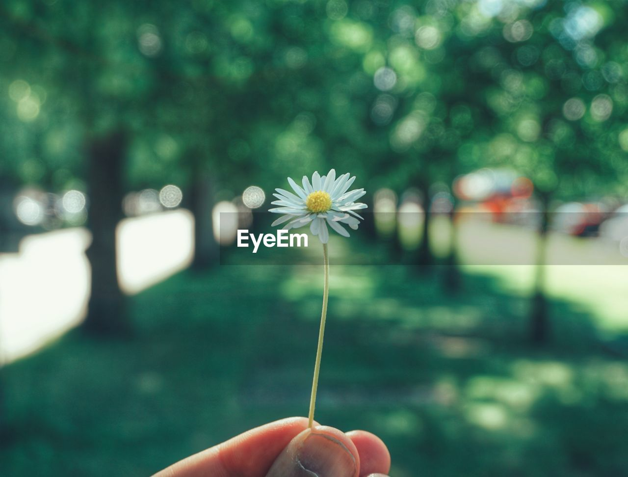 plant, human hand, flower, flowering plant, holding, hand, fragility, one person, vulnerability, freshness, human body part, body part, real people, focus on foreground, growth, beauty in nature, finger, nature, close-up, human finger, flower head, outdoors, dandelion seed, nail, human limb