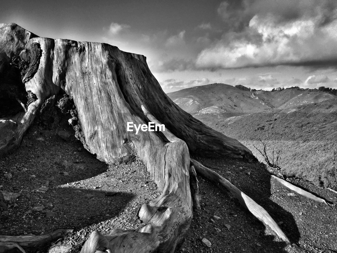Close-Up Of Tree Stump On Mountain Against Sky