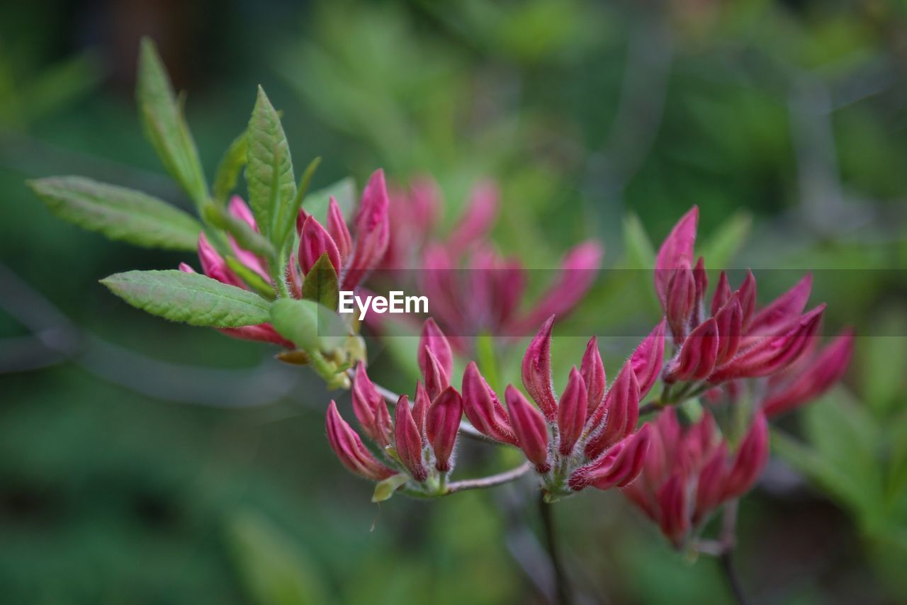 growth, plant, nature, red, flower, no people, outdoors, close-up, beauty in nature, day