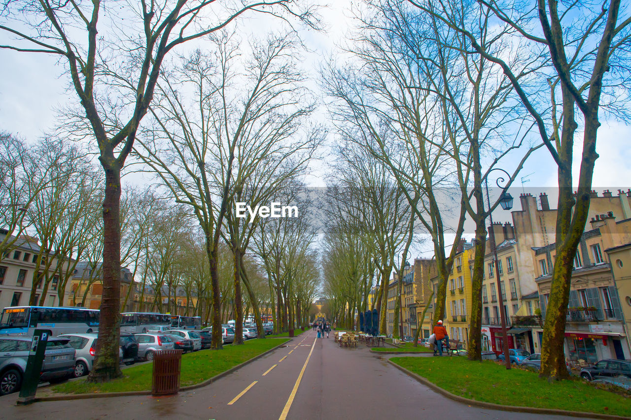 tree, road, bare tree, the way forward, architecture, transportation, street, built structure, car, land vehicle, city, day, building exterior, outdoors, sky, nature, no people