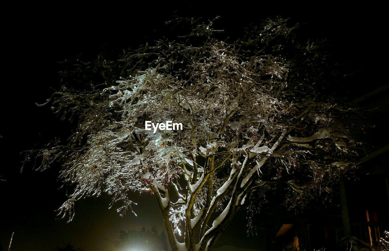 Low angle view of frozen trees at night