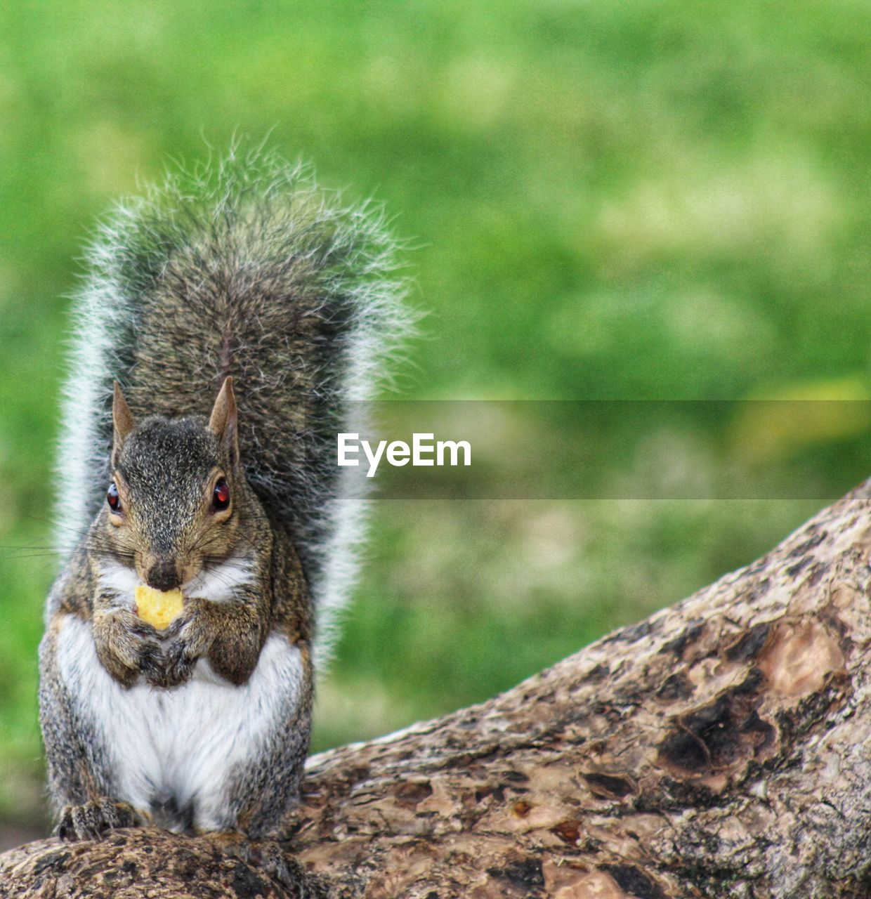 animal themes, animal, animal wildlife, one animal, animals in the wild, vertebrate, mammal, focus on foreground, rodent, squirrel, no people, nature, close-up, day, plant, outdoors, tree, land, tree trunk, trunk, whisker