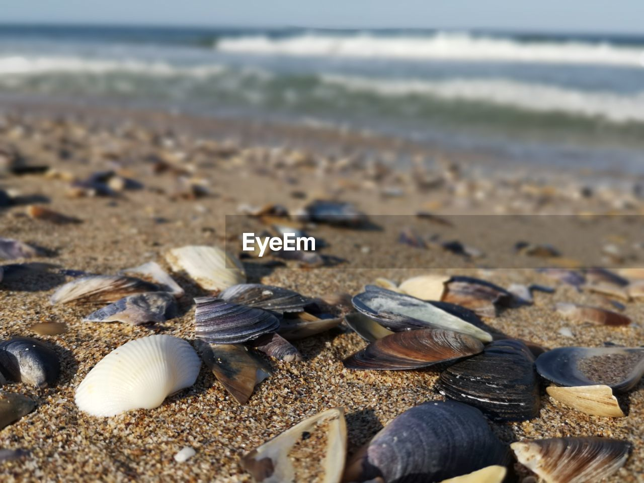 beach, land, sea, shell, sand, water, animal shell, nature, day, no people, beauty in nature, seashell, close-up, animal wildlife, tranquility, focus on foreground, animal, clam, sunlight, outdoors, surface level, marine