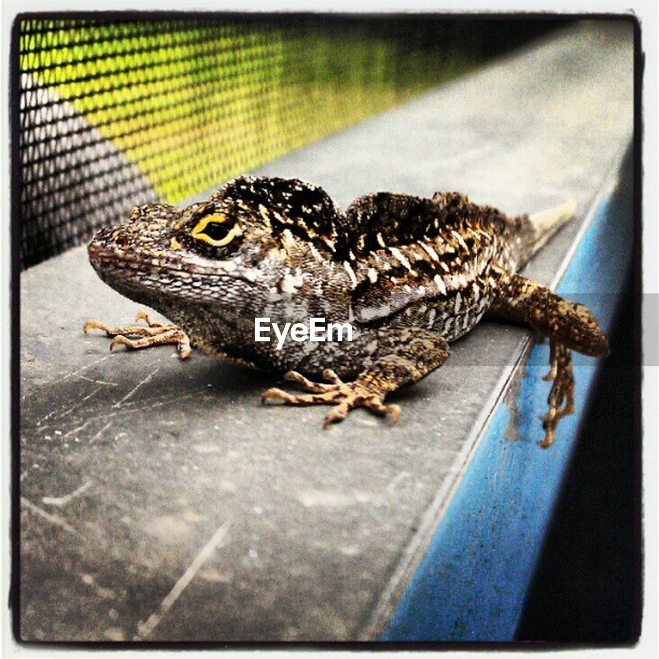 one animal, animal themes, animals in the wild, reptile, wildlife, day, animal wildlife, no people, close-up, outdoors, nature, full length