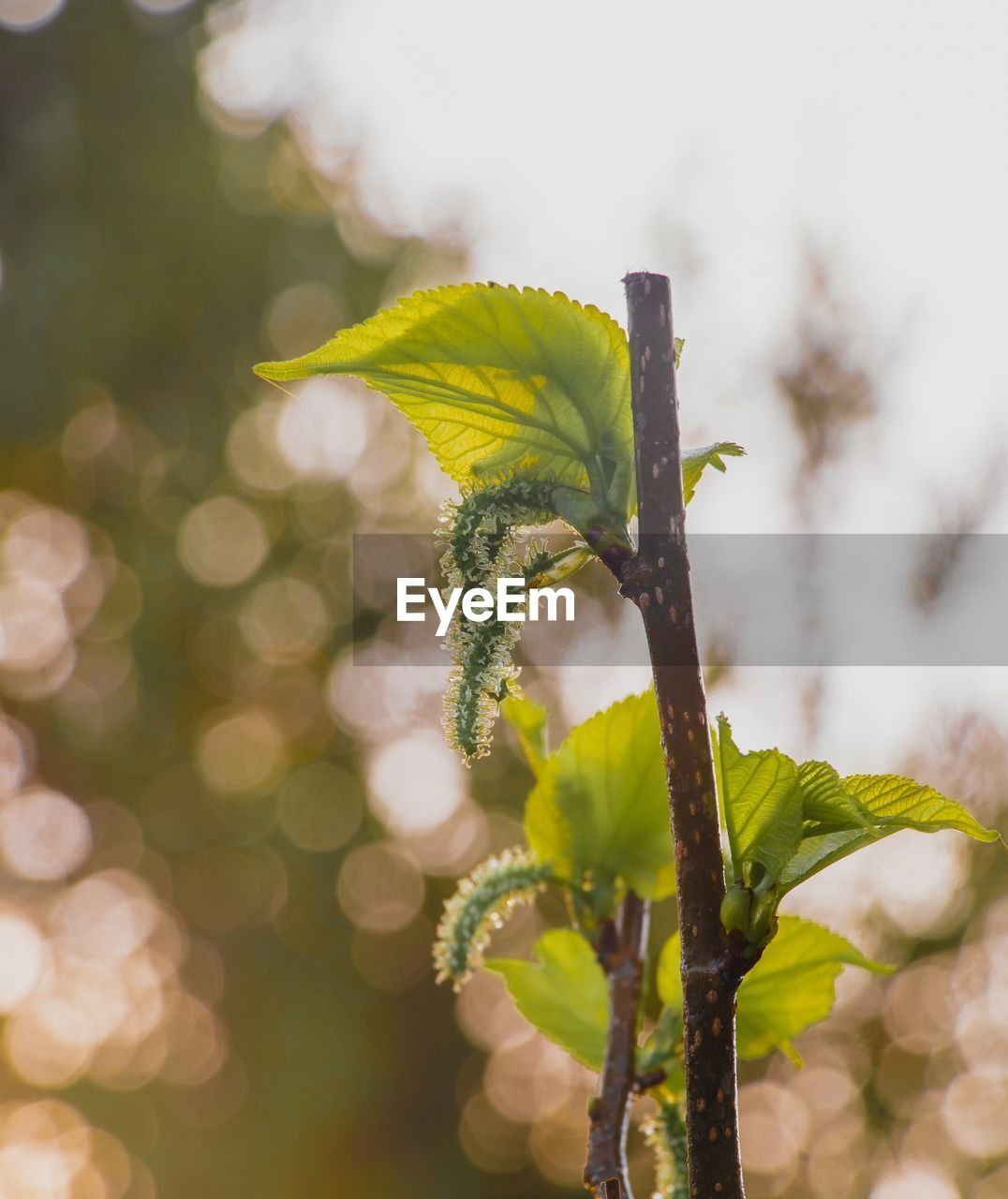 plant, growth, beauty in nature, close-up, nature, green color, yellow, no people, focus on foreground, vulnerability, fragility, flower, day, flowering plant, selective focus, outdoors, plant stem, plant part, freshness, leaf, flower head, sepal