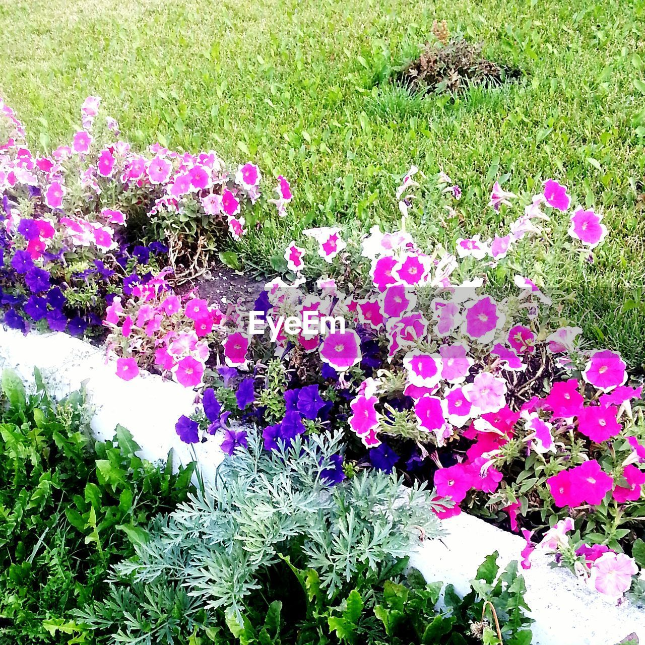 flower, growth, nature, grass, pink color, plant, beauty in nature, field, no people, outdoors, freshness, day, fragility, blooming, flower head