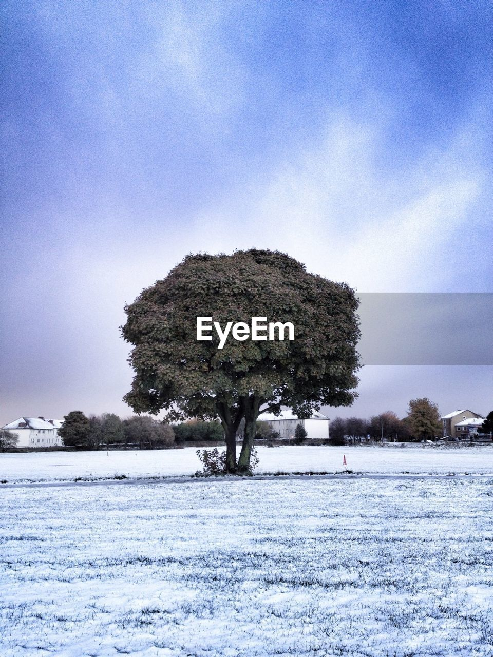 winter, snow, cold temperature, tree, landscape, nature, weather, cold, tranquil scene, tranquility, beauty in nature, solitude, frozen, scenics, outdoors, lone, field, day, sky, no people