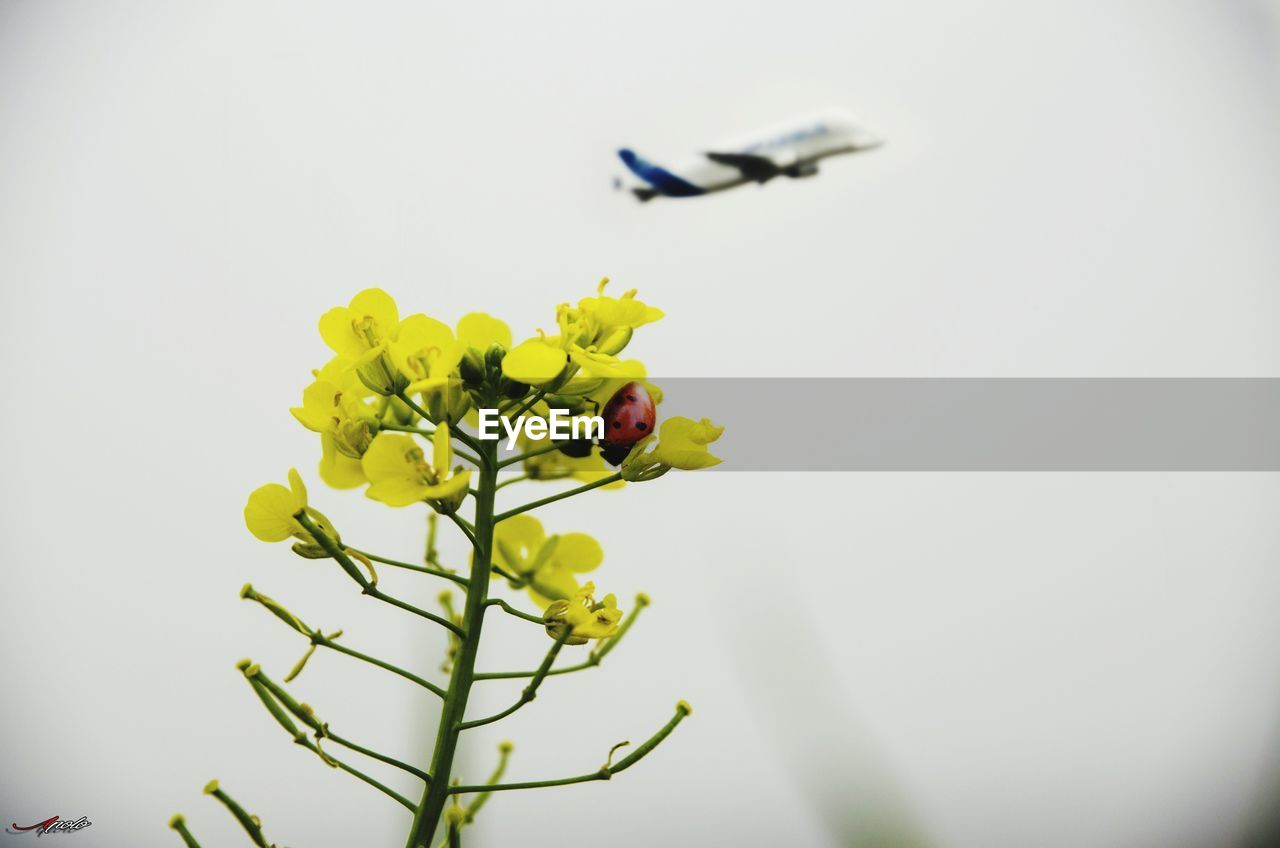 flower, flowering plant, vulnerability, fragility, plant, beauty in nature, growth, freshness, nature, petal, yellow, close-up, no people, day, flower head, selective focus, inflorescence, animal themes, outdoors, animal, springtime
