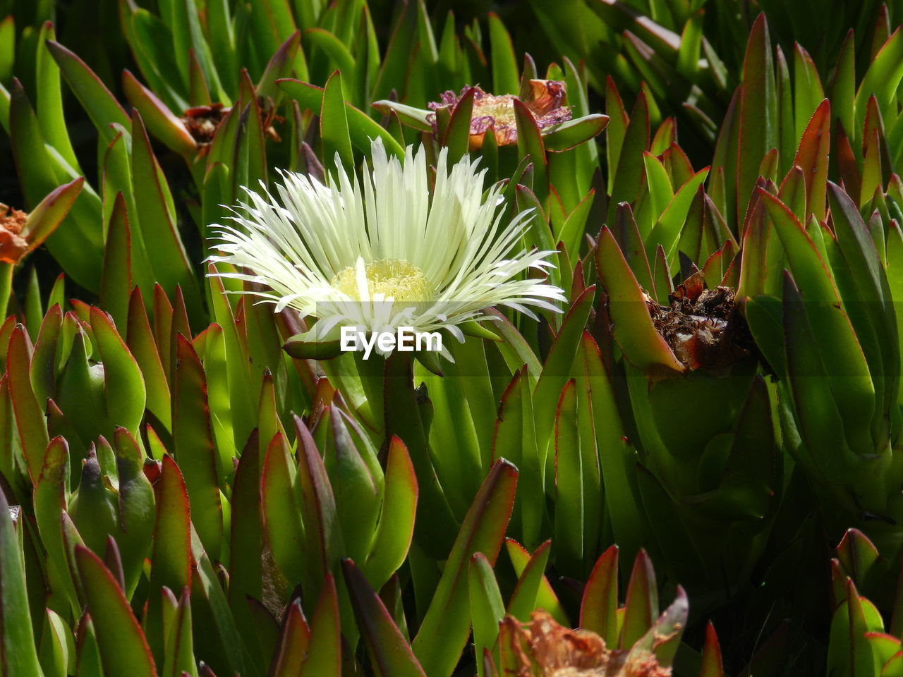 flower, flowering plant, plant, growth, vulnerability, fragility, freshness, beauty in nature, petal, close-up, flower head, inflorescence, nature, green color, white color, no people, day, pollen, focus on foreground, botany