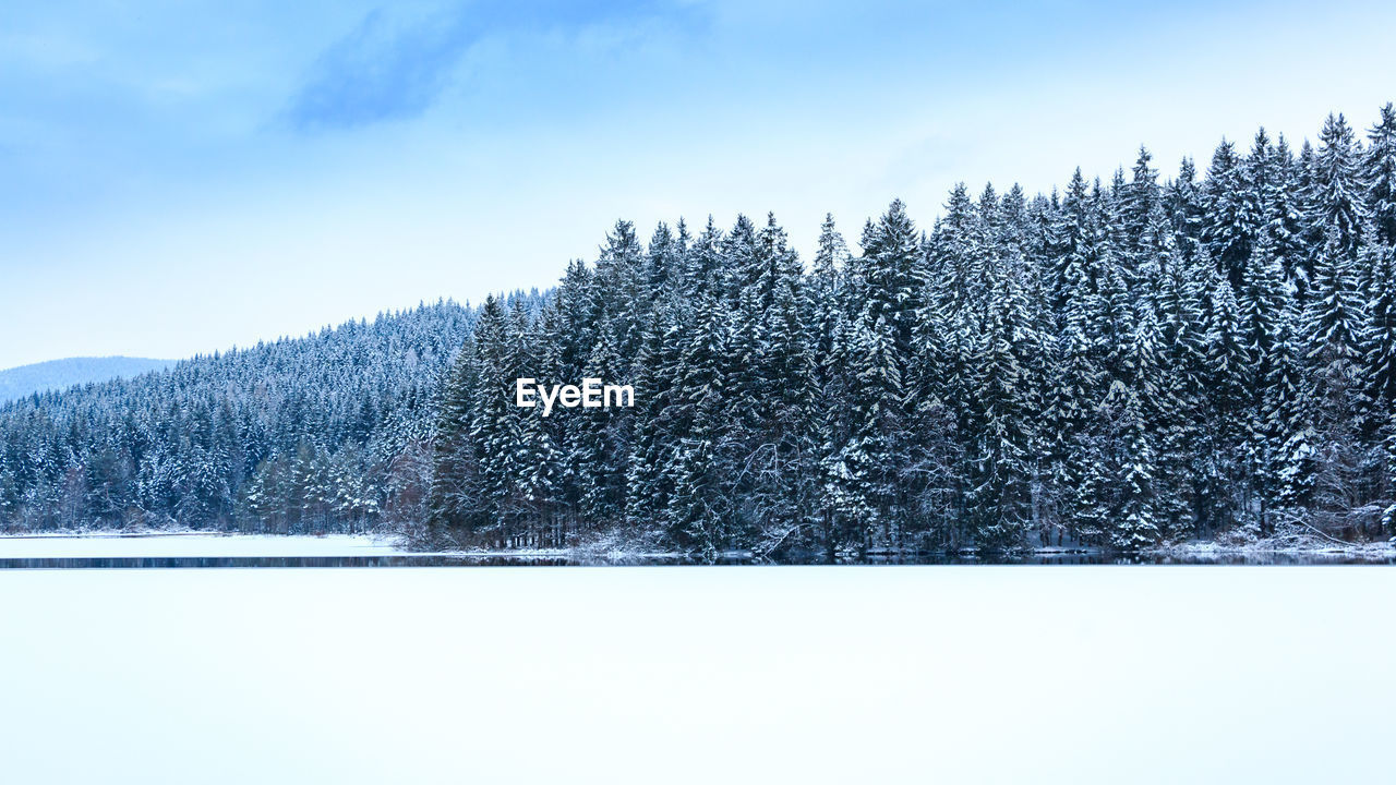 snow, winter, cold temperature, tree, plant, tranquil scene, tranquility, sky, beauty in nature, scenics - nature, nature, non-urban scene, land, white color, day, mountain, forest, no people, covering, outdoors, pine tree, coniferous tree, snowcapped mountain