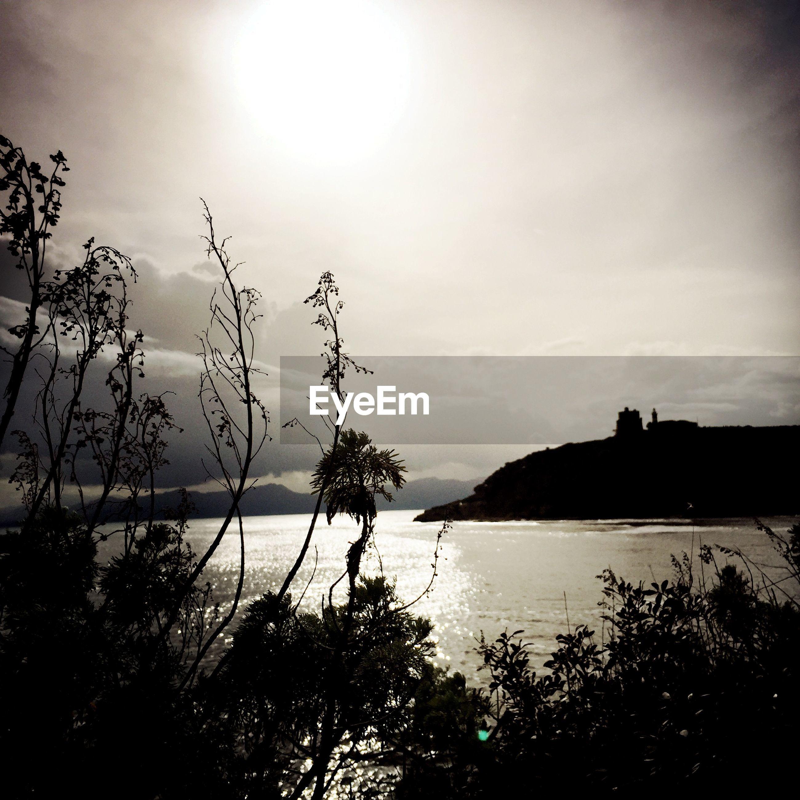 water, sea, tranquil scene, tranquility, sky, scenics, beauty in nature, silhouette, horizon over water, nature, tree, beach, shore, idyllic, plant, sun, sunset, calm, sunlight, cloud - sky