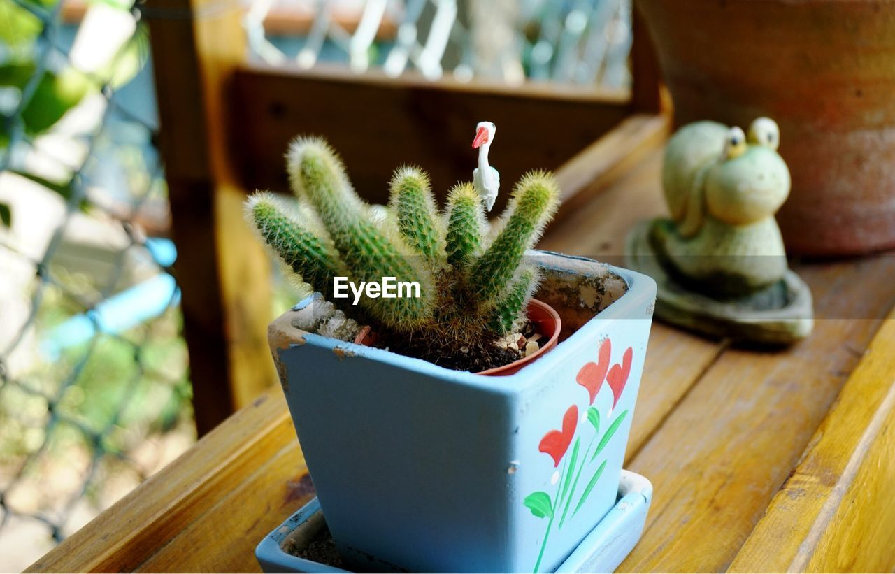 no people, potted plant, wood - material, focus on foreground, cactus, table, succulent plant, plant, still life, close-up, growth, indoors, day, food and drink, green color, nature, container, selective focus, food, flower pot