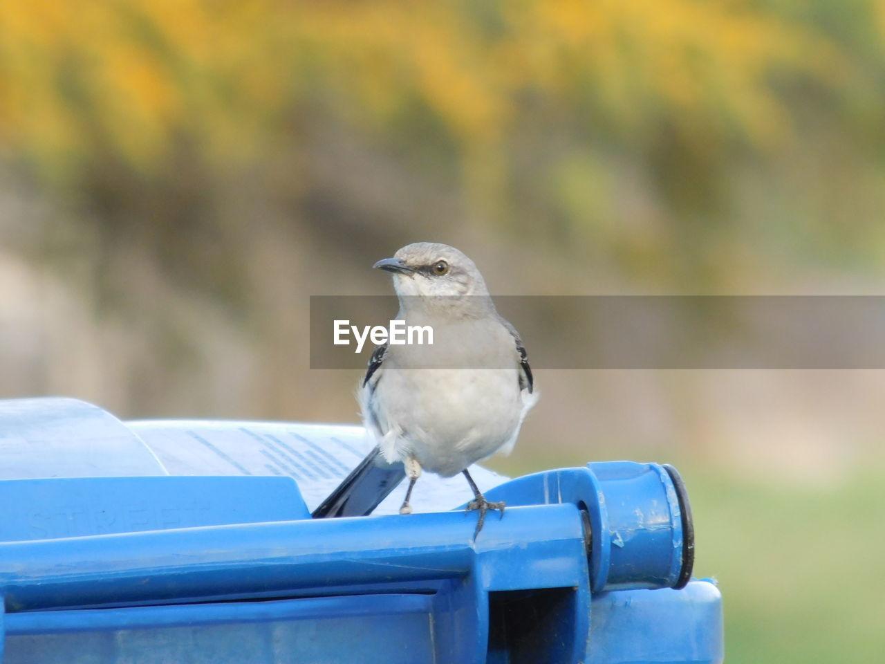 Close-Up Of Bird Perching On Garbage Bin