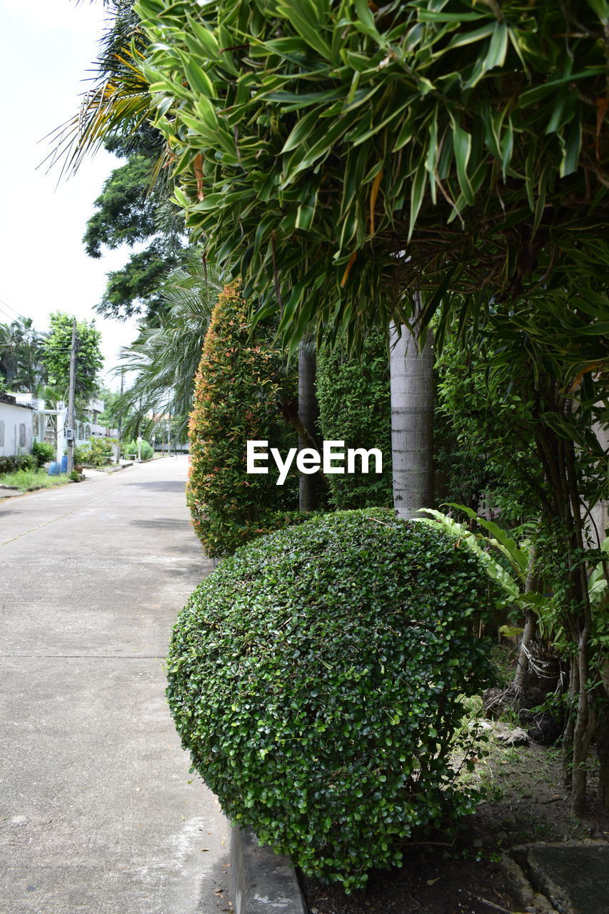 plant, green color, tree, growth, nature, no people, day, outdoors, footpath, garden, topiary, beauty in nature, park, palm tree, formal garden, park - man made space, front or back yard, close-up, sky, tropical climate, hedge, treelined