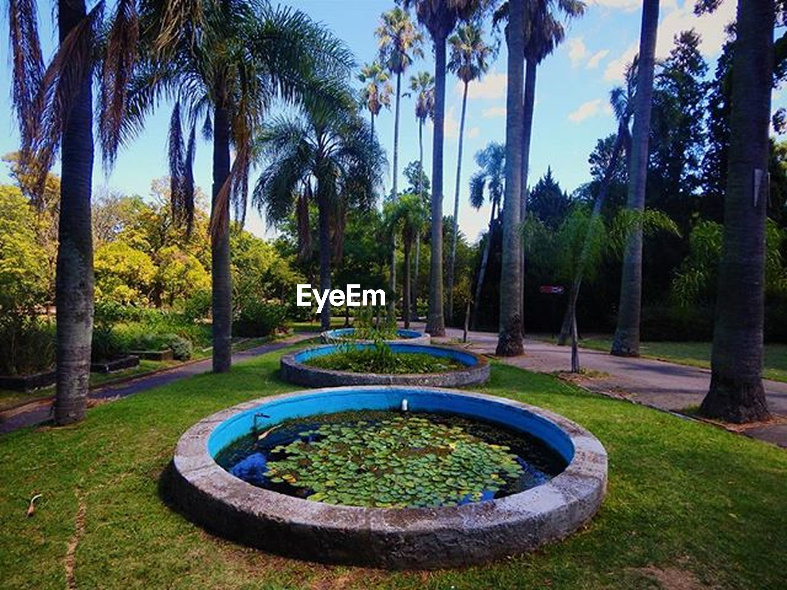 tree, palm tree, growth, park - man made space, water, green color, grass, nature, tree trunk, tranquility, beauty in nature, plant, sunlight, formal garden, fountain, park, tranquil scene, day, scenics, outdoors