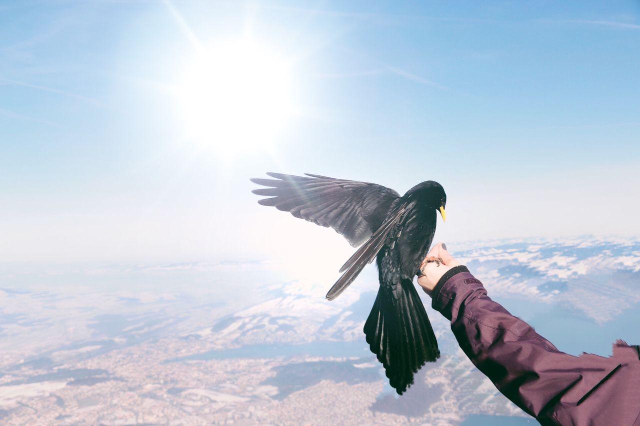 Bird Perching On Hand Over Landscape