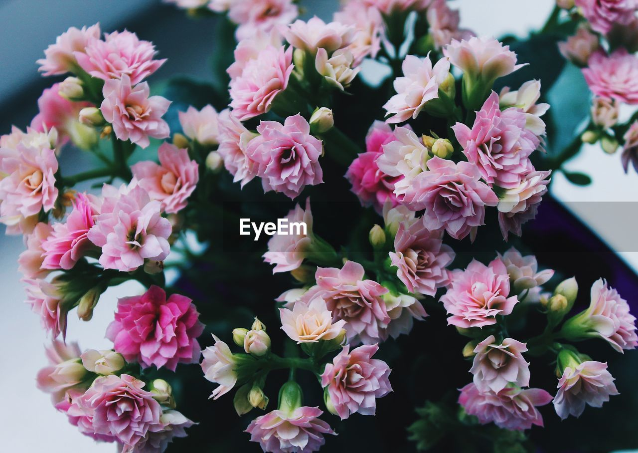 flowering plant, flower, plant, freshness, fragility, vulnerability, beauty in nature, pink color, petal, close-up, flower head, inflorescence, growth, no people, nature, day, outdoors, botany, high angle view, focus on foreground, bunch of flowers, pollen, flower arrangement, bouquet