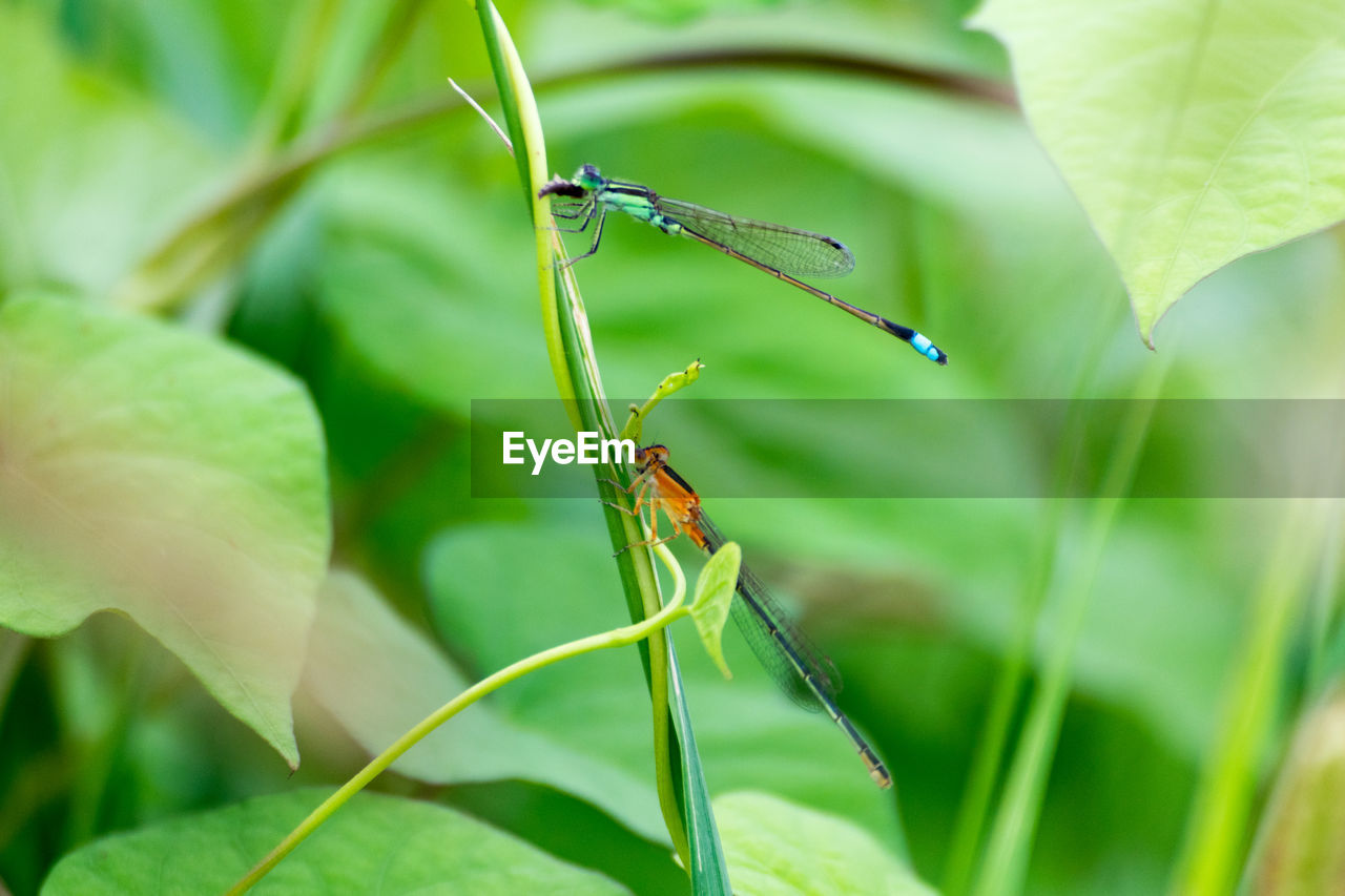 insect, invertebrate, animal wildlife, animals in the wild, animal themes, animal, plant part, leaf, one animal, plant, green color, close-up, selective focus, nature, growth, day, no people