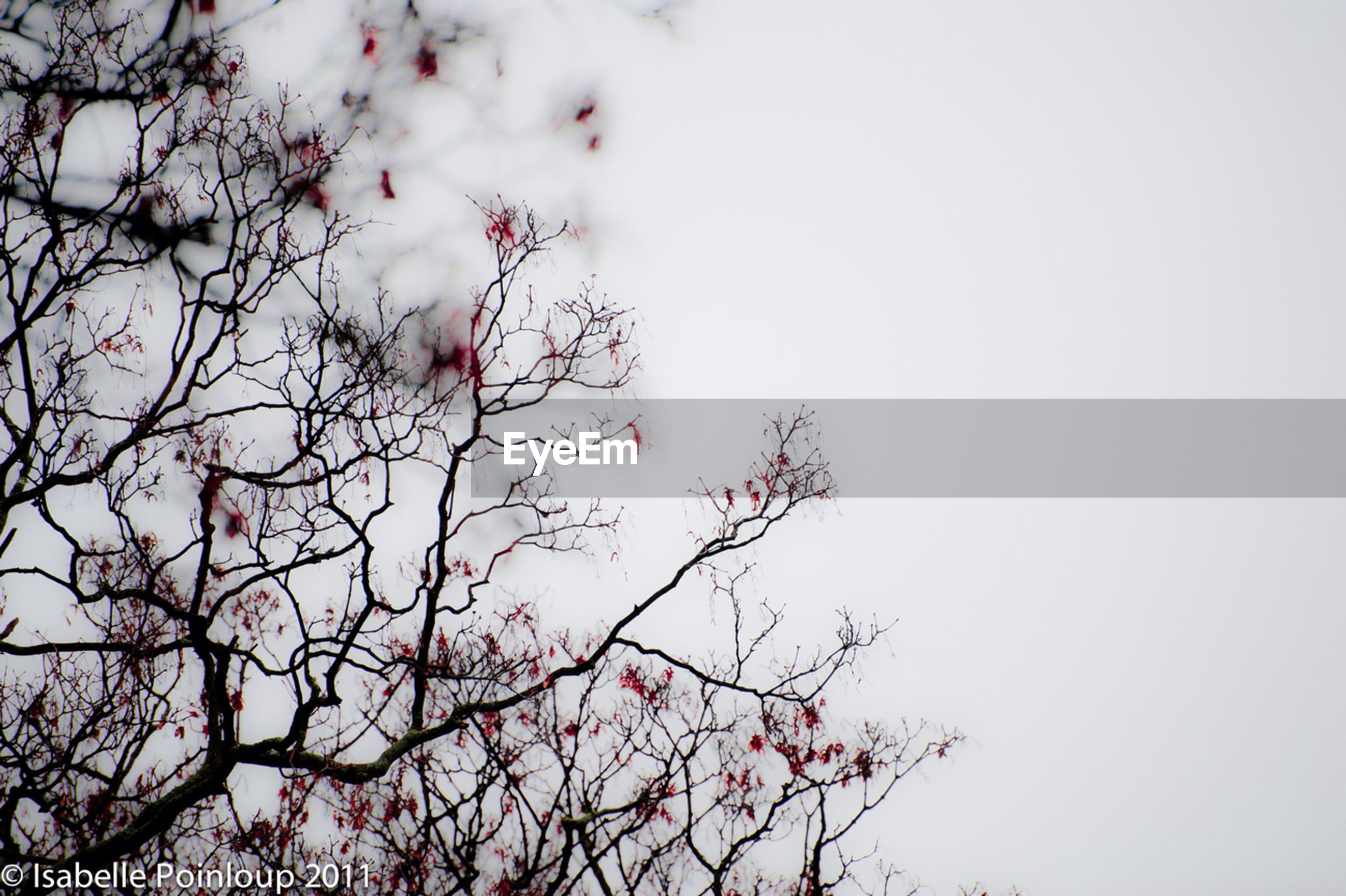 low angle view, tree, branch, sky, beauty in nature, nature, growth, flower, high section, clear sky, outdoors, pink color, tranquility, day, treetop, no people, scenics, cloud - sky, freshness, fragility