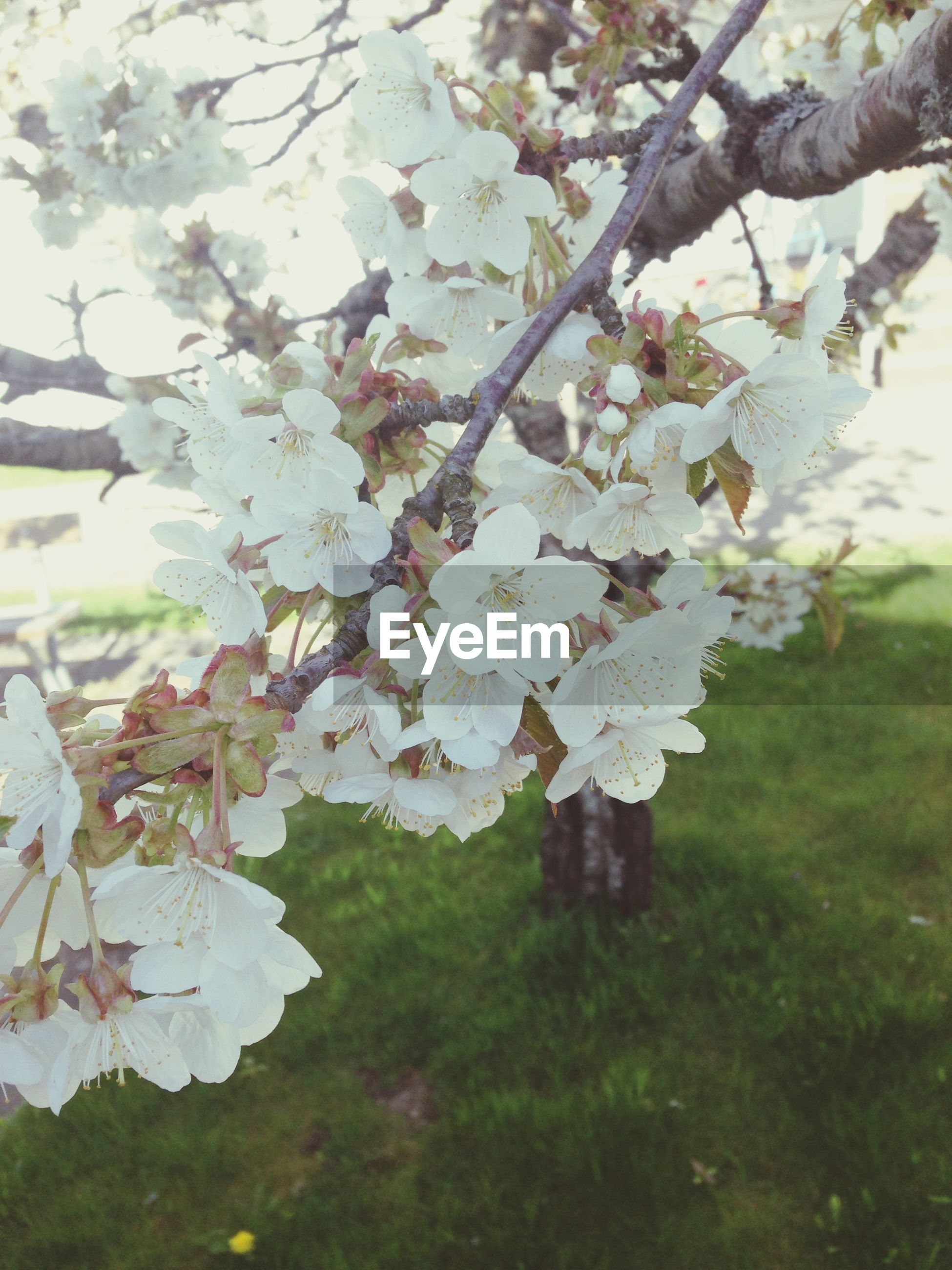 branch, growth, tree, nature, beauty in nature, flower, white color, season, leaf, fragility, freshness, close-up, focus on foreground, tranquility, day, outdoors, no people, blossom, winter, twig