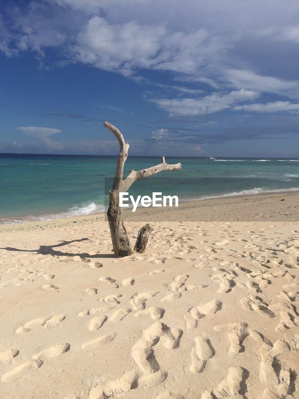 land, water, beach, sea, sky, cloud - sky, sand, horizon over water, horizon, beauty in nature, nature, scenics - nature, tranquility, tranquil scene, day, non-urban scene, idyllic, no people, sunlight, driftwood