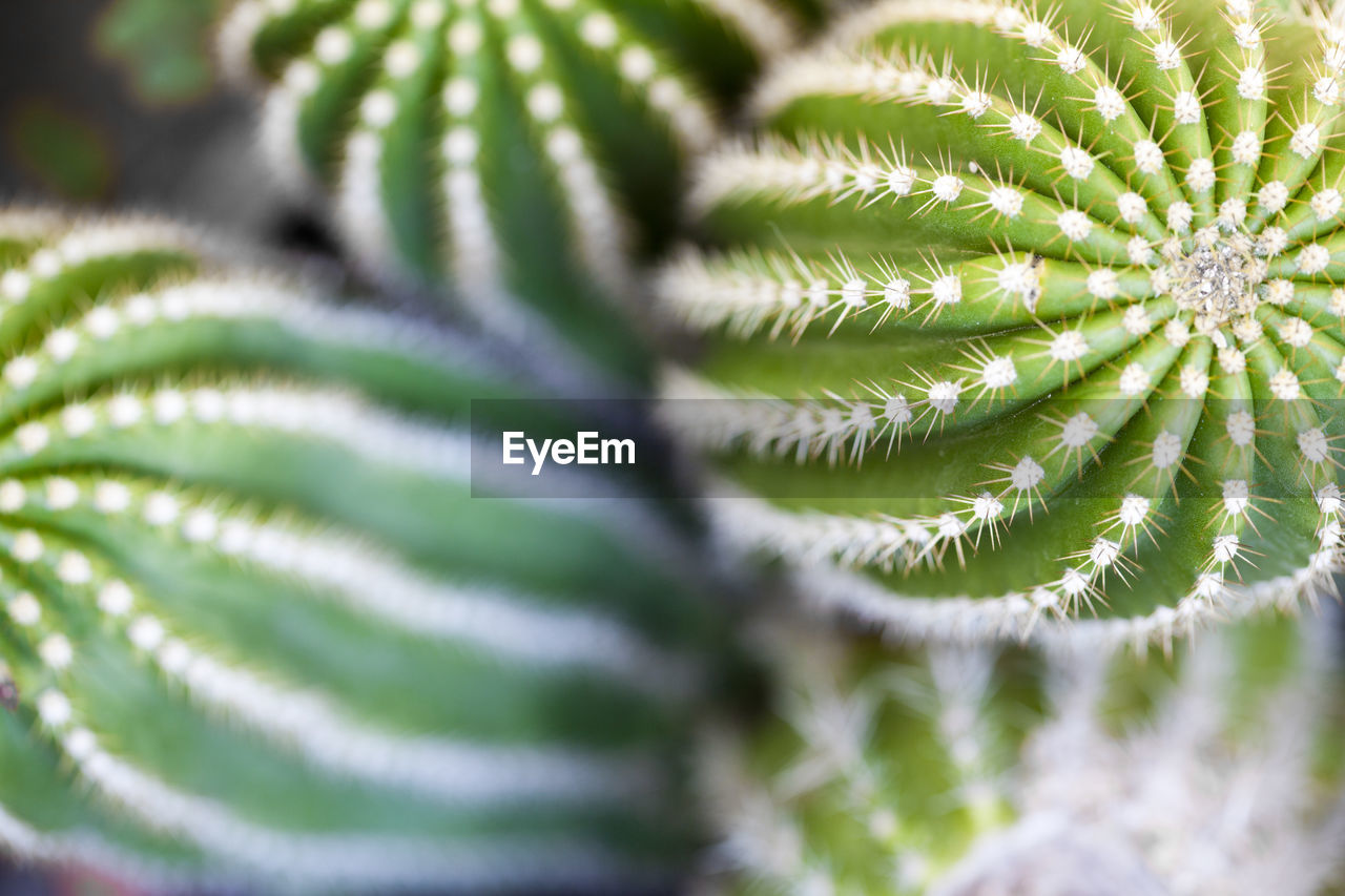 green color, selective focus, pattern, growth, close-up, plant, no people, beauty in nature, day, leaf, nature, plant part, full frame, natural pattern, outdoors, fragility, succulent plant, vulnerability, backgrounds, focus on foreground, softness, coniferous tree