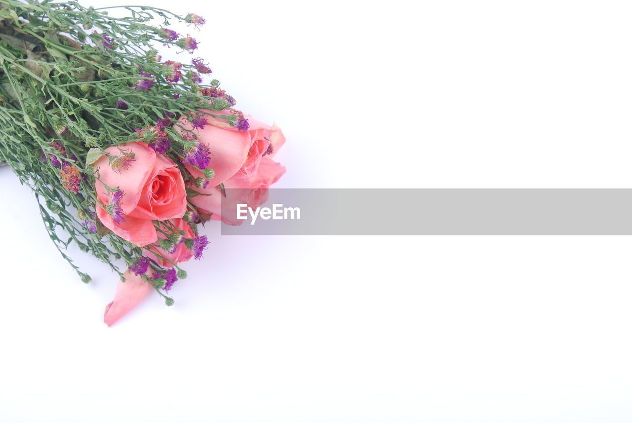 plant, flower, flowering plant, studio shot, white background, beauty in nature, freshness, copy space, rose, rose - flower, nature, flower head, vulnerability, fragility, pink color, indoors, no people, close-up, inflorescence, petal, flower arrangement, bouquet, bunch of flowers