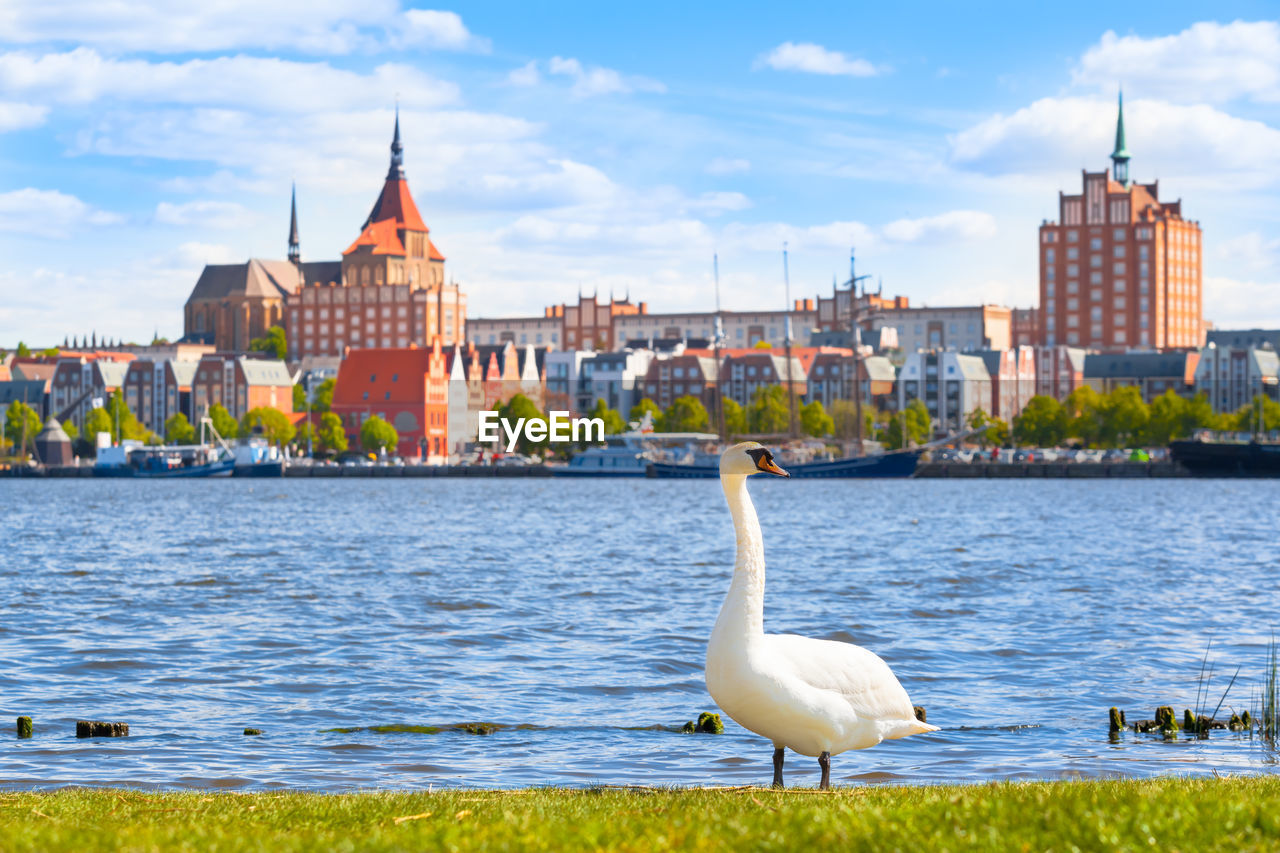 built structure, building exterior, architecture, bird, water, vertebrate, animal themes, animal, animal wildlife, sky, animals in the wild, nature, one animal, city, river, cloud - sky, building, day, no people, outdoors, seagull