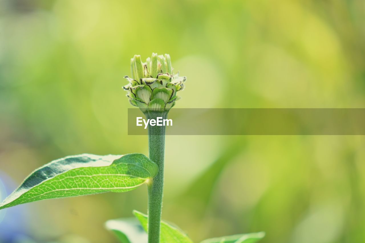 growth, plant, green color, plant part, leaf, beauty in nature, close-up, nature, focus on foreground, beginnings, day, no people, freshness, vulnerability, fragility, plant stem, flower, new life, outdoors, selective focus