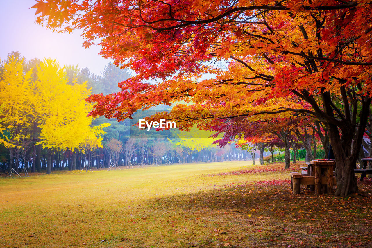 autumn, tree, change, plant, plant part, leaf, orange color, scenics - nature, beauty in nature, park, nature, land, day, tranquil scene, tranquility, no people, park - man made space, growth, landscape, seat, outdoors, autumn collection, fall, leaves, park bench