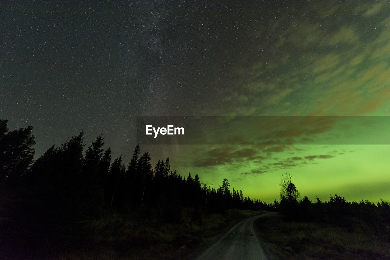 Scenic view of silhouette trees against aurora sky at night