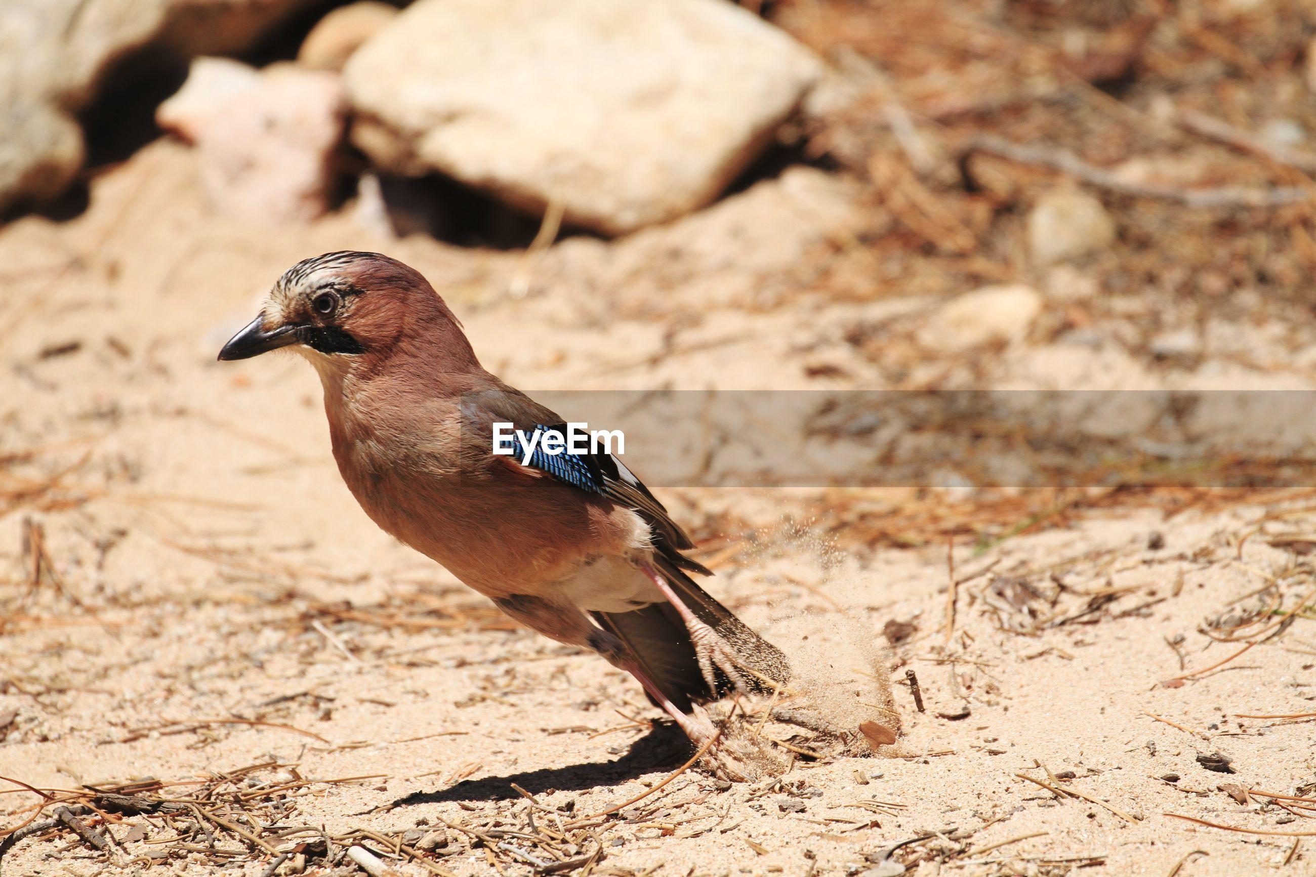 BIRD PERCHING ON FIELD
