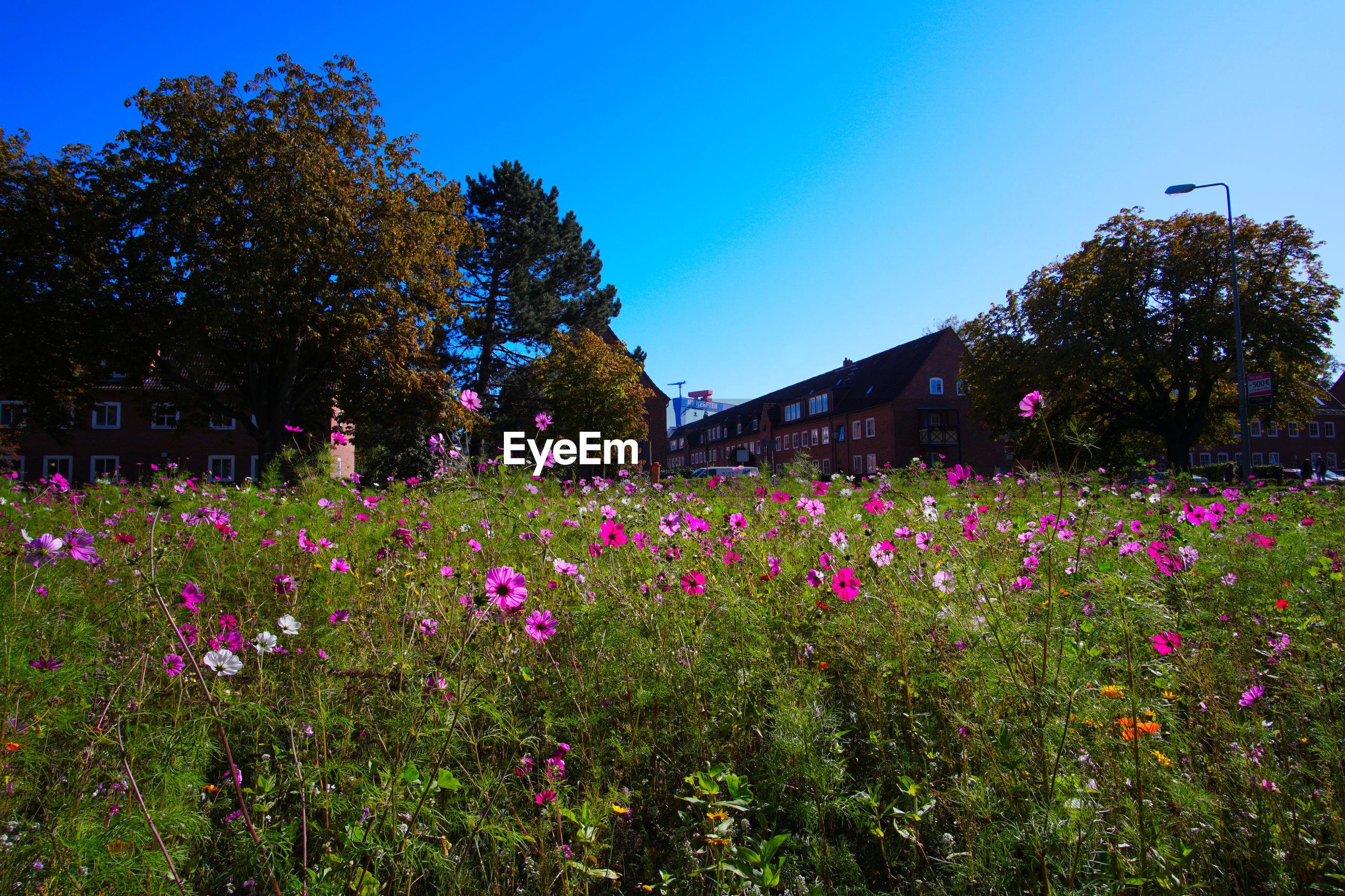 PINK FLOWERING PLANTS BY TREES AGAINST SKY