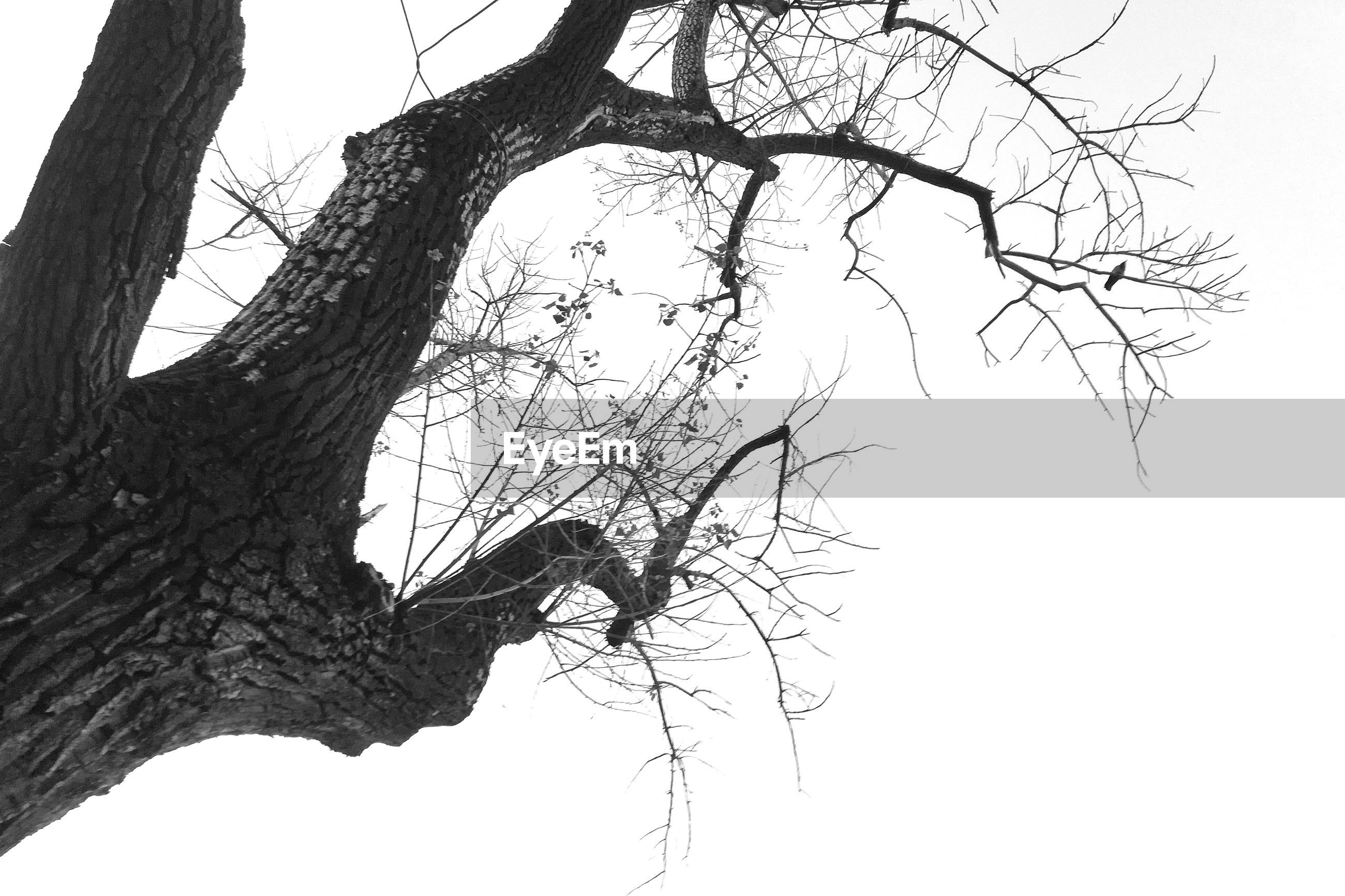 LOW ANGLE VIEW OF DEAD TREE