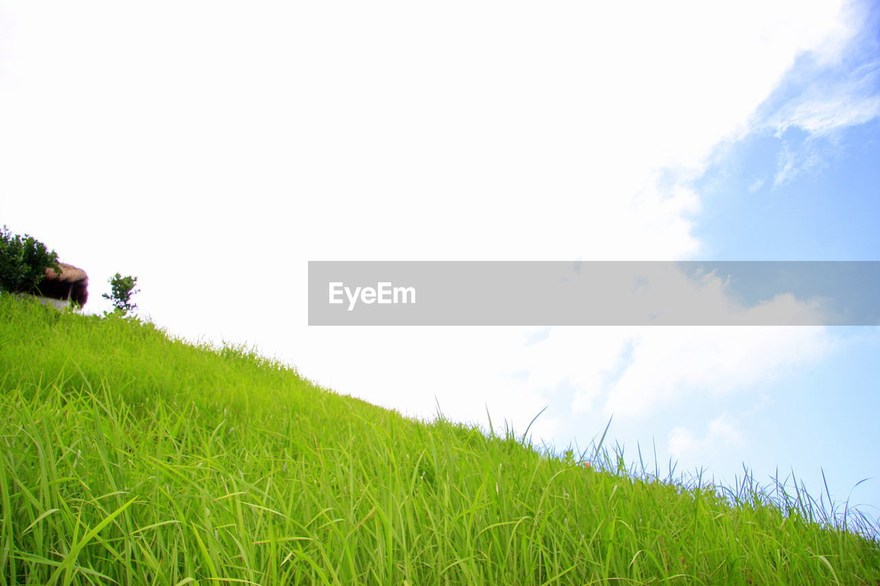grass, growth, field, nature, agriculture, landscape, green color, no people, day, outdoors, tranquility, beauty in nature, sky, clear sky, rural scene