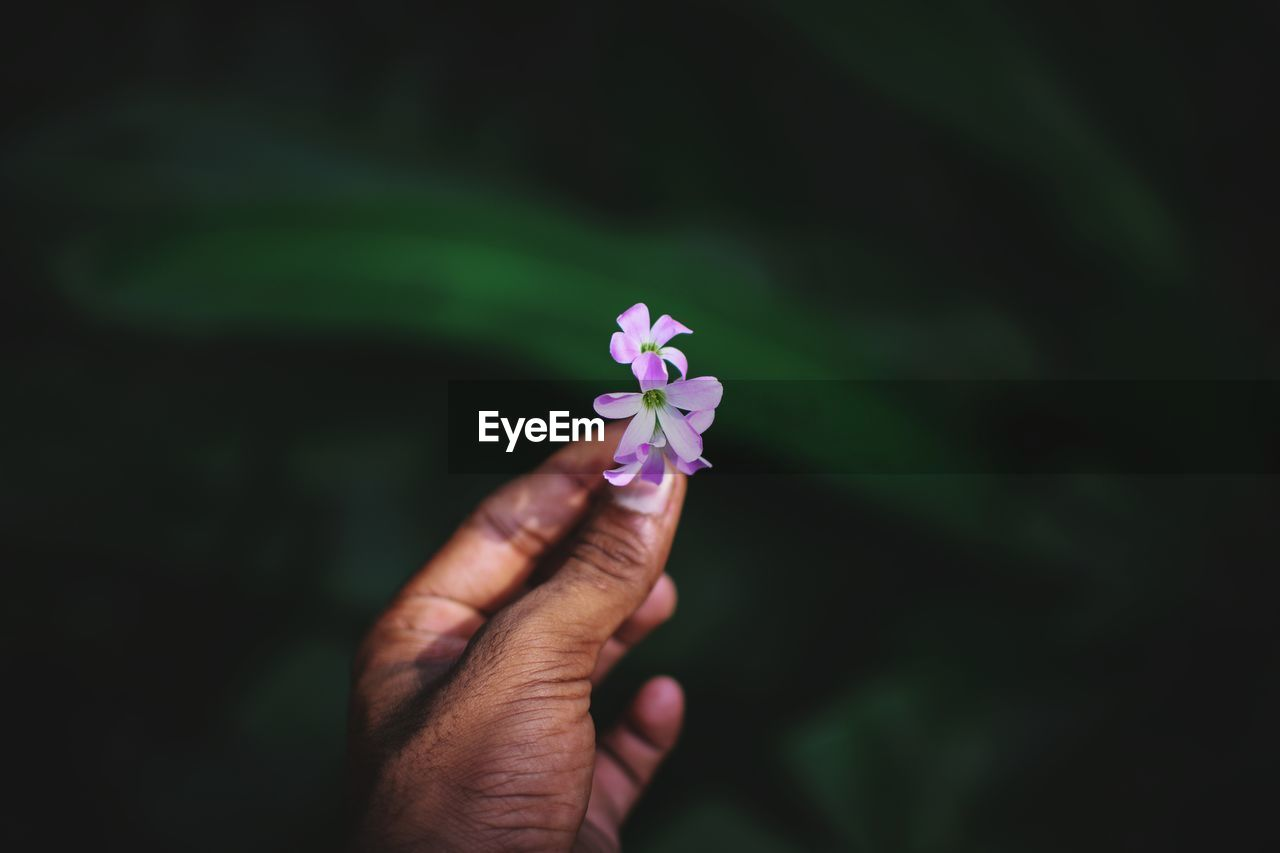 human hand, hand, one person, human body part, holding, flower, flowering plant, real people, vulnerability, freshness, fragility, plant, body part, close-up, focus on foreground, nature, petal, beauty in nature, unrecognizable person, finger, outdoors, flower head, human limb, purple
