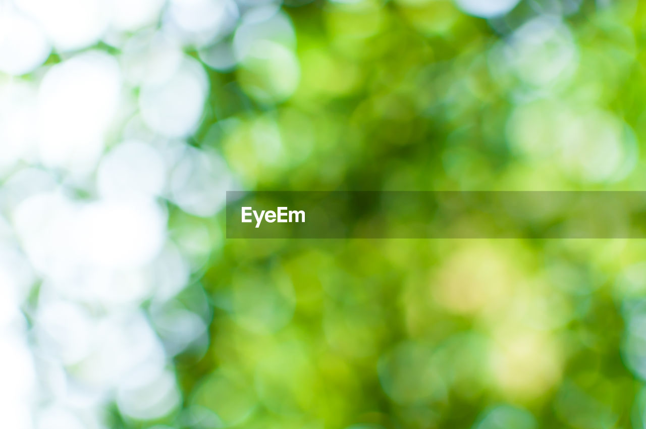 day, no people, nature, plant, outdoors, growth, close-up, selective focus, beauty in nature, defocused, tranquility, green color, backgrounds, focus on foreground, sunlight, full frame, tree, freshness, leaf, plant part