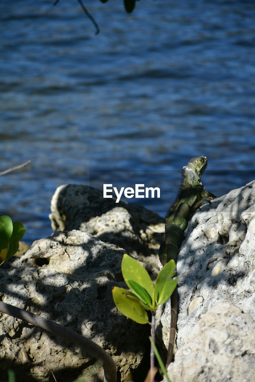 nature, rock - object, water, outdoors, day, close-up, no people, beauty in nature, plant, growth, lake, leaf