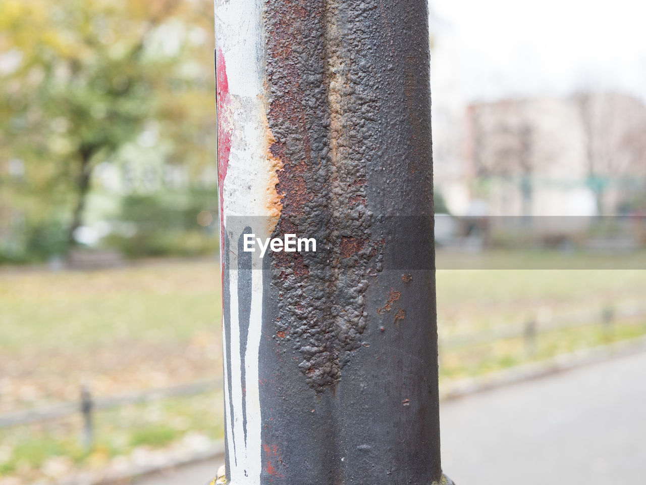 focus on foreground, day, close-up, no people, metal, tree trunk, outdoors, tree, nature