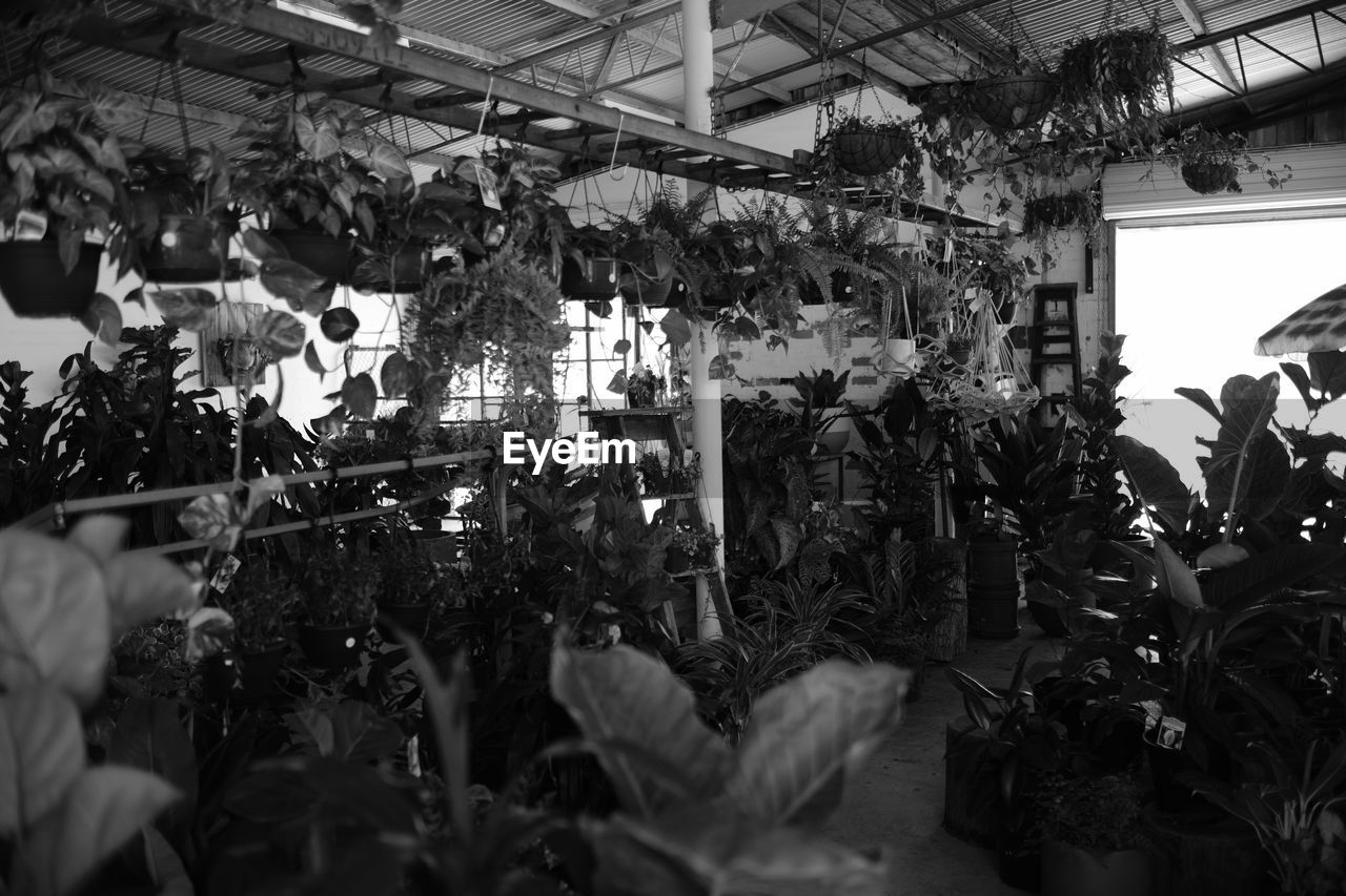 retail, market, buying, small business, plant, consumerism, growth, day, store, flower, indoors, business, freshness, nature, greenhouse, no people