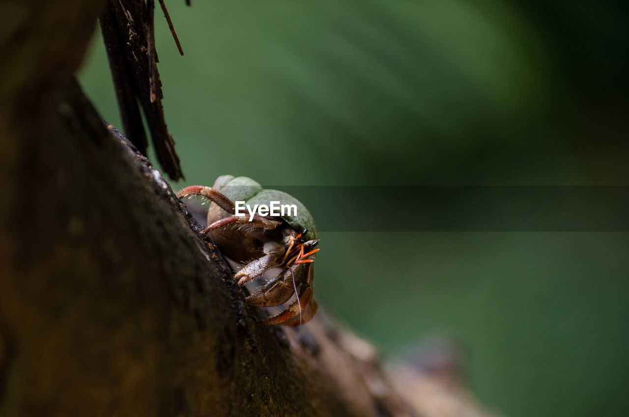 animals in the wild, animal themes, animal, close-up, selective focus, animal wildlife, tree, one animal, invertebrate, nature, day, tree trunk, no people, trunk, insect, plant, outdoors, wood - material, zoology, plant bark