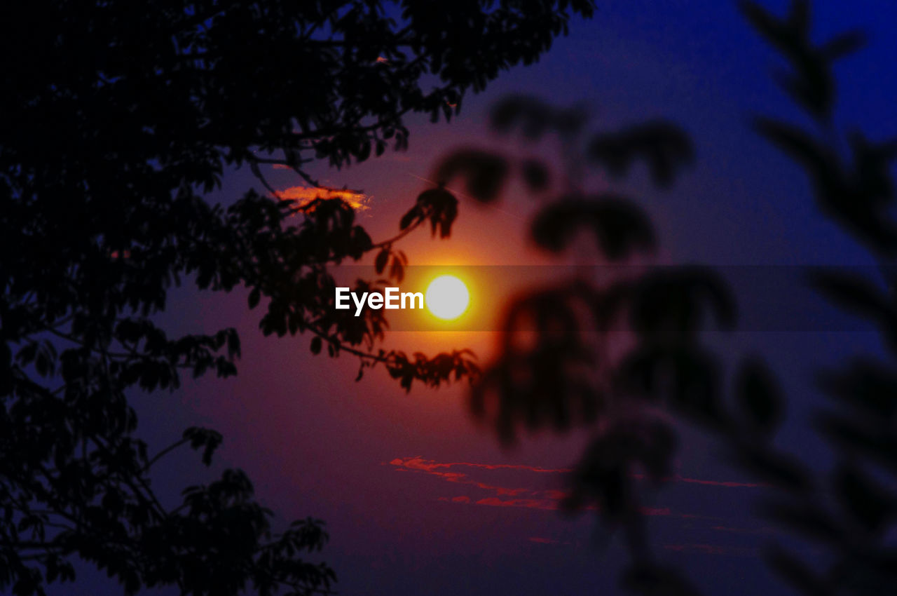 sky, silhouette, tree, plant, beauty in nature, sunset, scenics - nature, tranquility, sun, nature, tranquil scene, outdoors, no people, orange color, branch, leaf, growth, dusk, low angle view