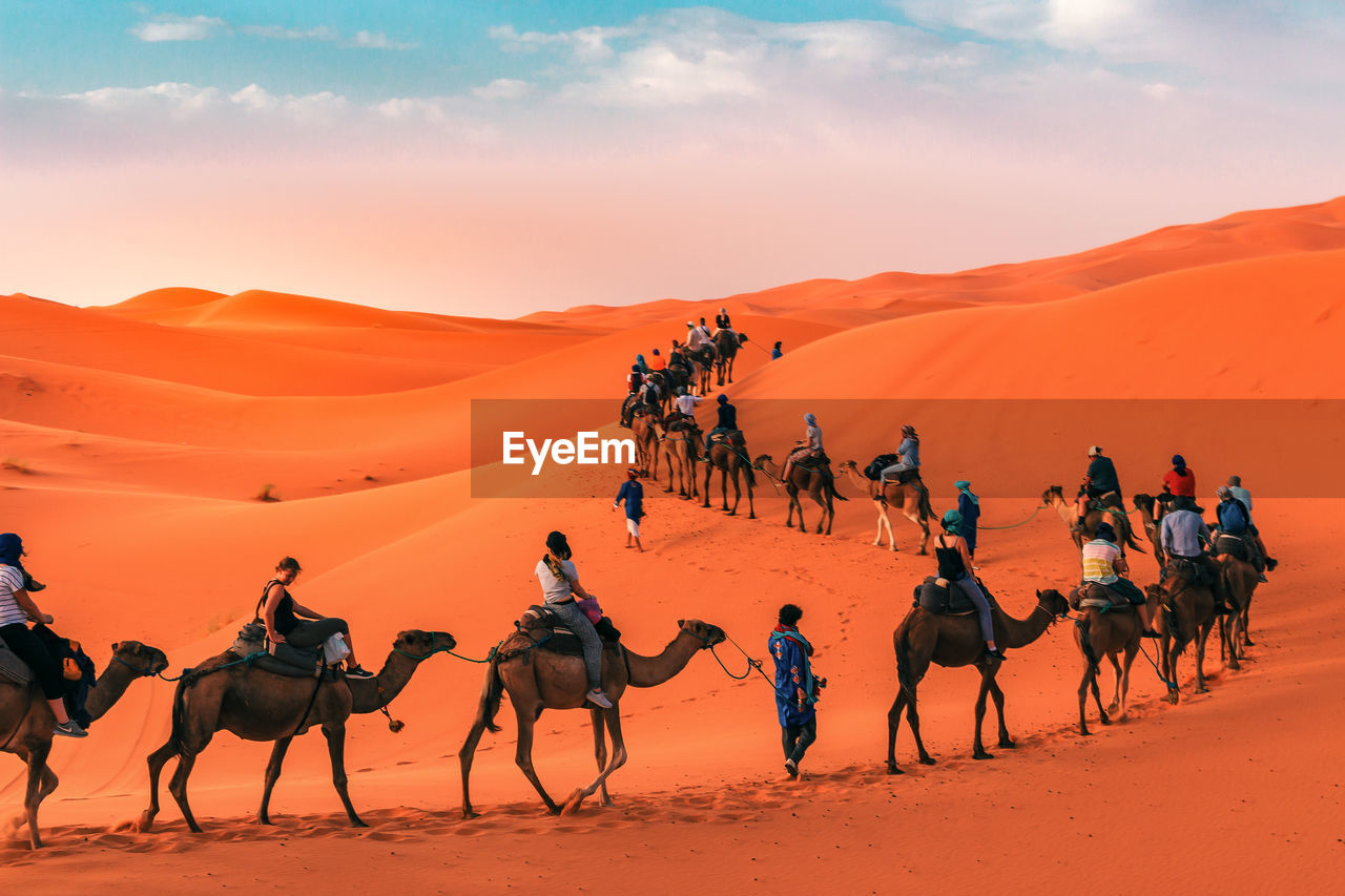 domestic animals, mammal, group of animals, animal themes, group of people, sky, working animal, animal, land, sunset, camel, desert, domestic, real people, scenics - nature, animal wildlife, livestock, sand, pets, sand dune, medium group of animals, riding, arid climate, outdoors, climate