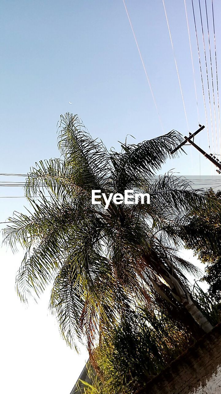 low angle view, cable, tree, sky, day, electricity, growth, nature, no people, outdoors, palm tree, clear sky, beauty in nature, vapor trail