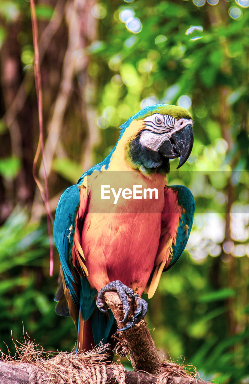 vertebrate, animal themes, animal, bird, animal wildlife, animals in the wild, perching, one animal, focus on foreground, tree, parrot, branch, plant, nature, no people, day, macaw, close-up, beauty in nature, full length